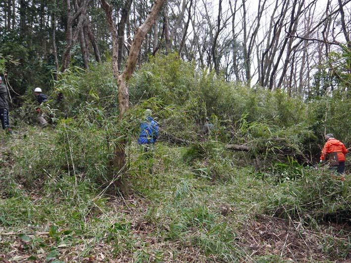 予想遙かに上回る倒木、枯れ木:2・16六国見山定例手入れ_c0014967_10384879.jpg