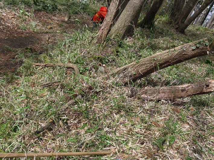予想遙かに上回る倒木、枯れ木:2・16六国見山定例手入れ_c0014967_1039334.jpg