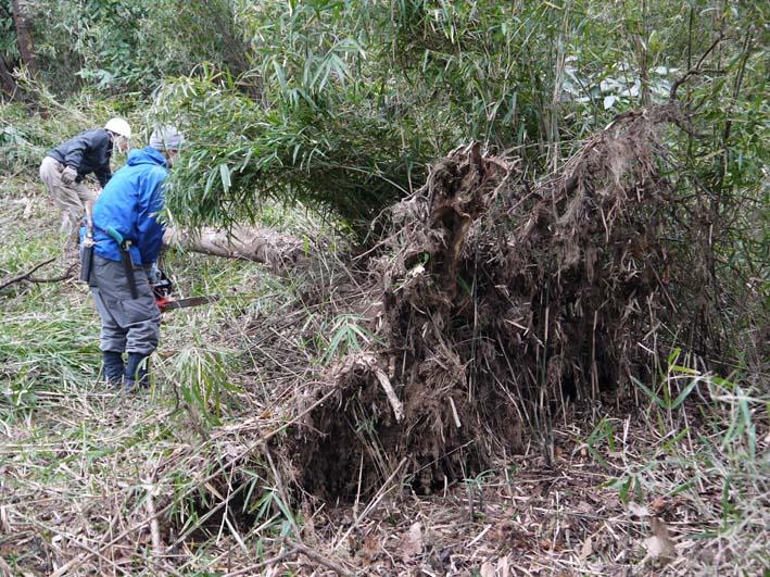 予想遙かに上回る倒木、枯れ木:2・16六国見山定例手入れ_c0014967_1039356.jpg