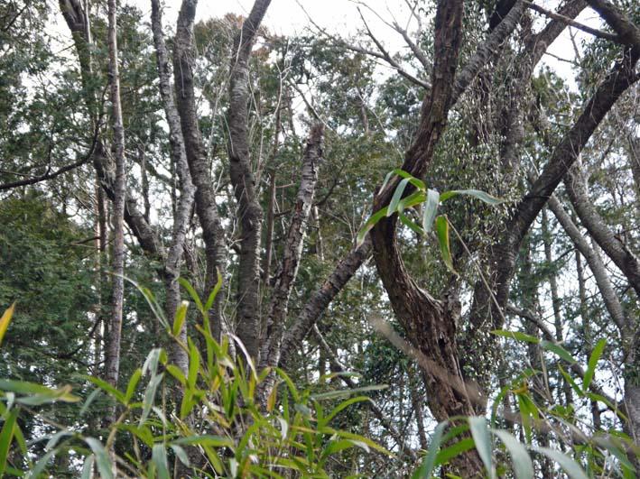 予想遙かに上回る倒木、枯れ木:2・16六国見山定例手入れ_c0014967_10394849.jpg