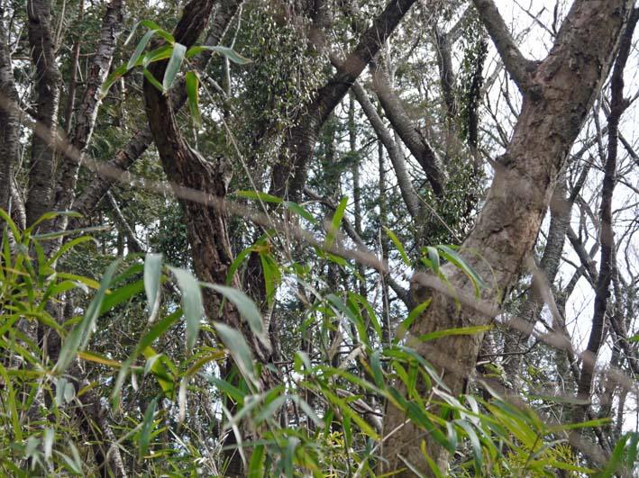 予想遙かに上回る倒木、枯れ木:2・16六国見山定例手入れ_c0014967_1040382.jpg