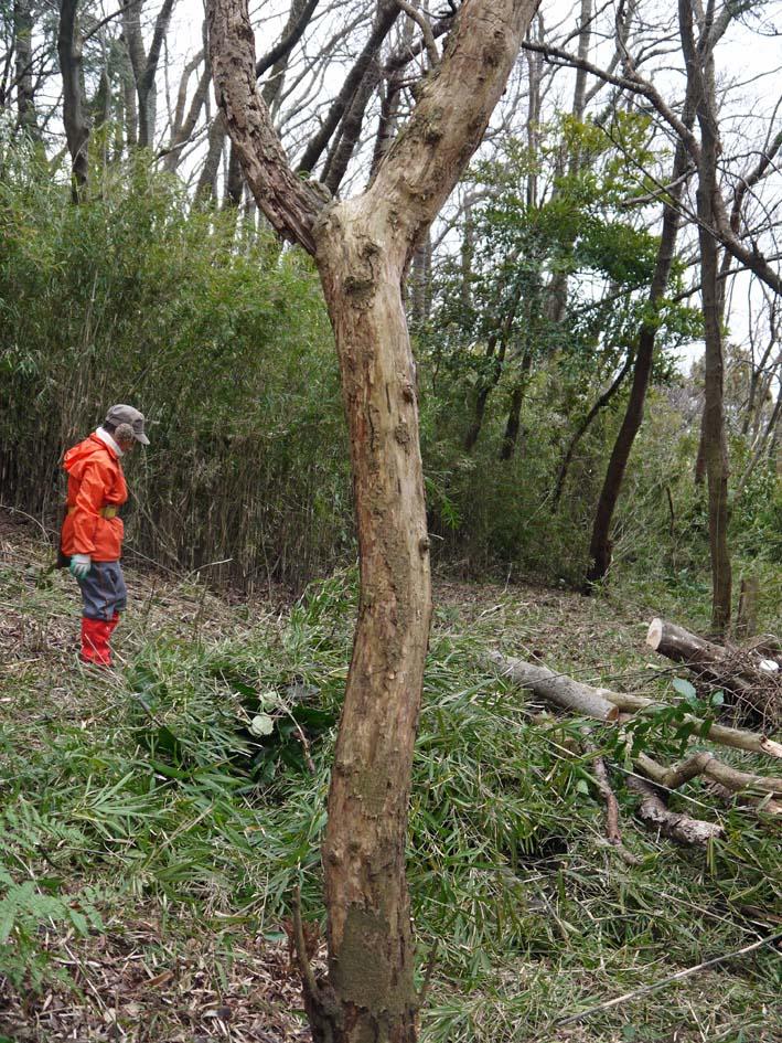 予想遙かに上回る倒木、枯れ木:2・16六国見山定例手入れ_c0014967_10404573.jpg
