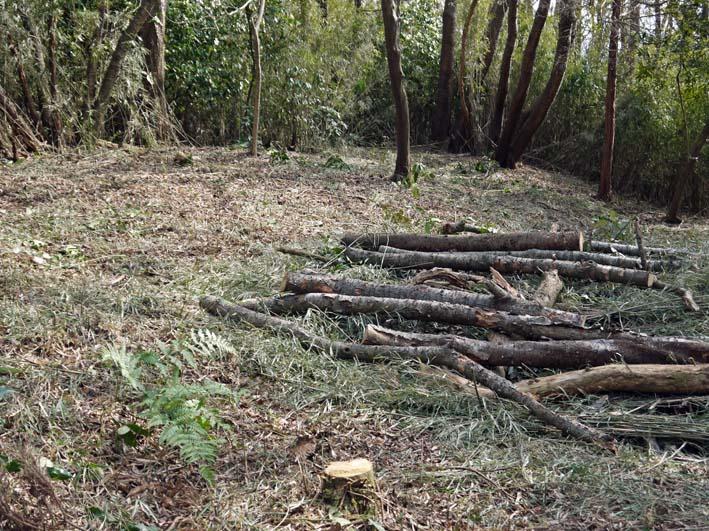 予想遙かに上回る倒木、枯れ木:2・16六国見山定例手入れ_c0014967_10445184.jpg