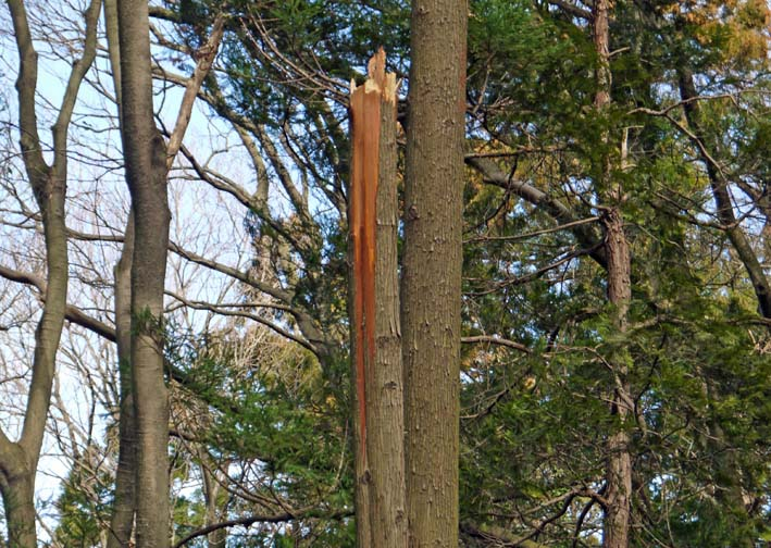 検証:六国見山の樹木はなぜ、かくも多数倒れ、折れるのか_c0014967_12124878.jpg