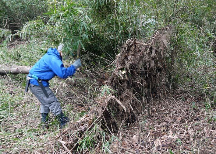検証:六国見山の樹木はなぜ、かくも多数倒れ、折れるのか_c0014967_12233265.jpg
