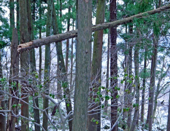 検証:六国見山の樹木はなぜ、かくも多数倒れ、折れるのか_c0014967_12274045.jpg