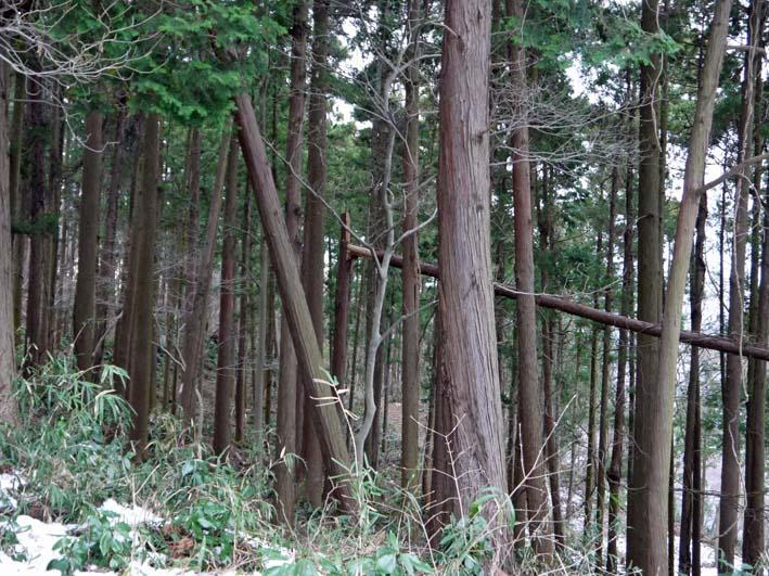 検証:六国見山の樹木はなぜ、かくも多数倒れ、折れるのか_c0014967_1228845.jpg