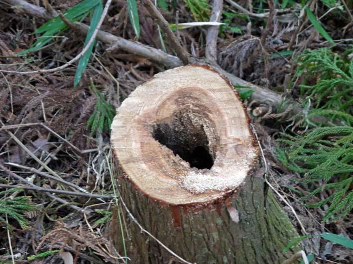検証:六国見山の樹木はなぜ、かくも多数倒れ、折れるのか_c0014967_12374029.jpg