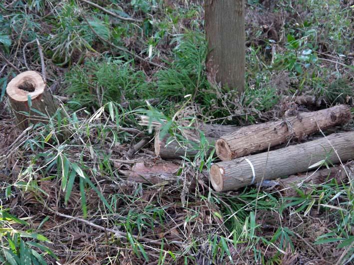 検証:六国見山の樹木はなぜ、かくも多数倒れ、折れるのか_c0014967_12382648.jpg