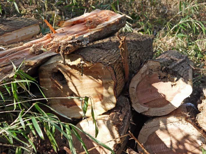 検証:六国見山の樹木はなぜ、かくも多数倒れ、折れるのか_c0014967_12391316.jpg
