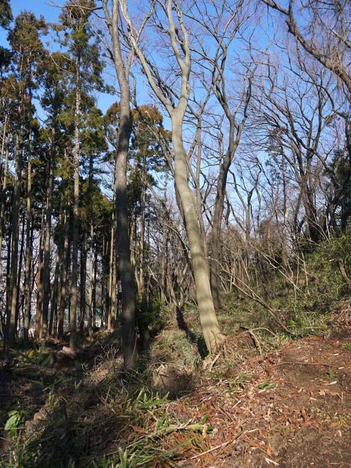 検証:六国見山の樹木はなぜ、かくも多数倒れ、折れるのか_c0014967_12421550.jpg