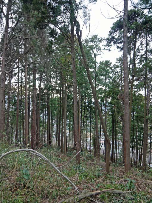 検証:六国見山の樹木はなぜ、かくも多数倒れ、折れるのか_c0014967_12453586.jpg