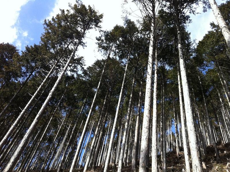 やまなしの森と青梅の森_c0131878_17461294.jpg