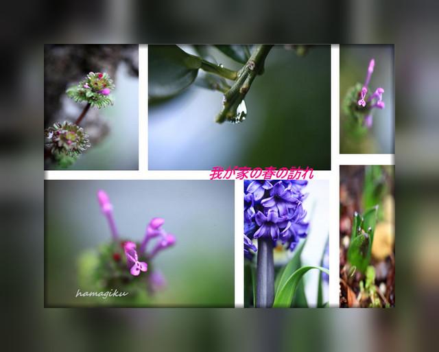 家の周りの春_e0305388_10183671.jpg
