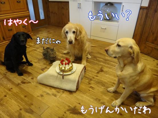 みんなの誕生日2013_f0064906_16343920.jpg