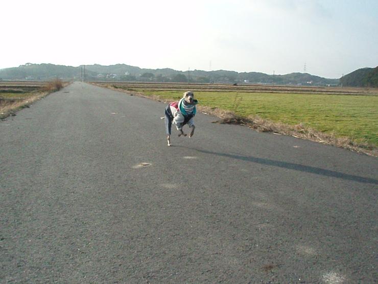 お散歩のひとコマ  _f0249710_22402681.jpg