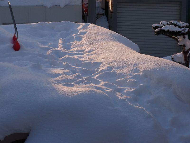 寒い一日、アマゾンのクレームの処理の速さにびっくり_c0025115_18334086.jpg