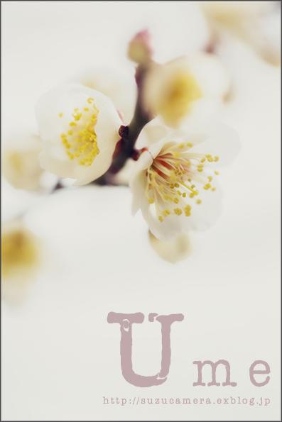 梅の花の咲く頃_f0100215_22262079.jpg