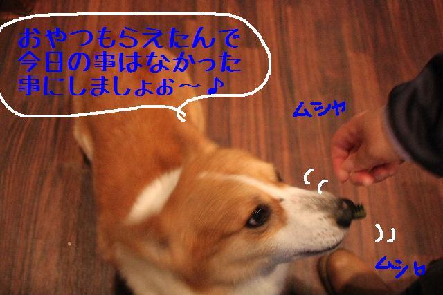 b0130018_2237669.jpg