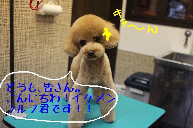 b0130018_2248024.jpg