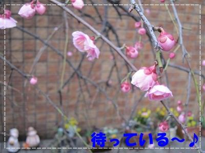 b0167519_16502959.jpg