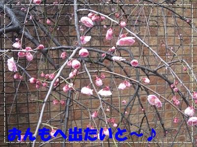 b0167519_1650947.jpg