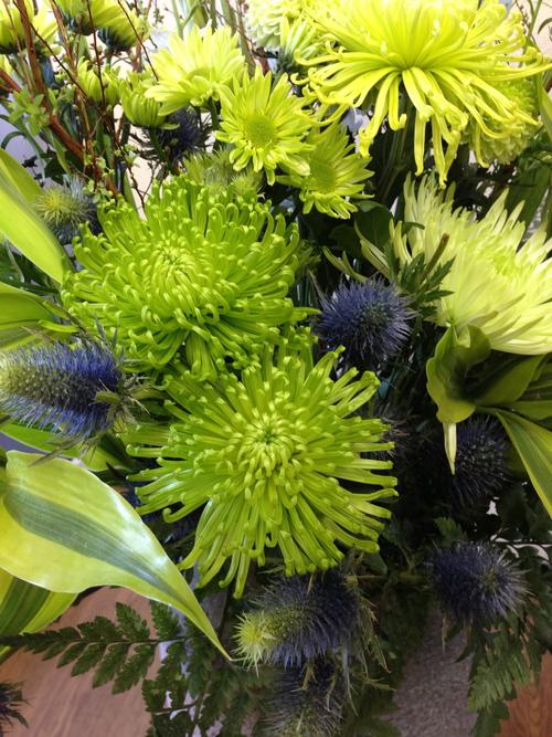 今週のお花とセール情報_a0200423_2001116.jpg