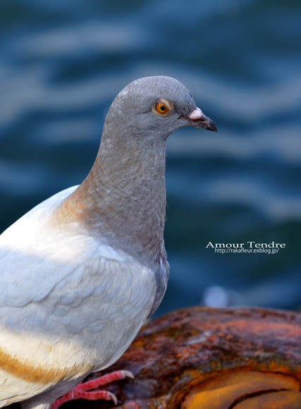 BIRDS_c0250634_14501290.jpg