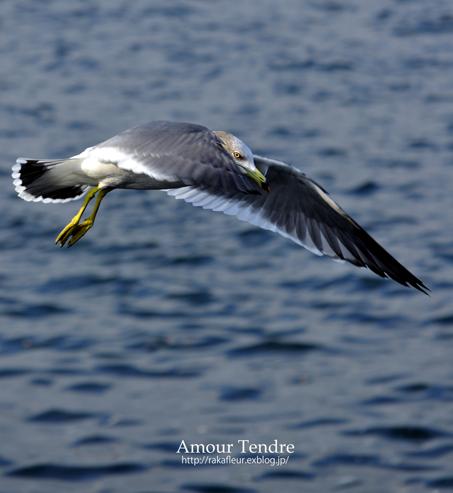 BIRDS_c0250634_14502347.jpg
