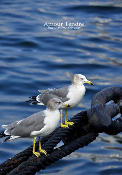 BIRDS_c0250634_15171664.jpg