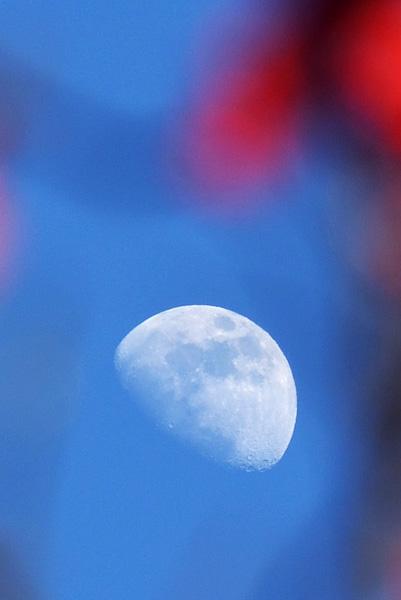 梅と昼の月_b0175635_1822653.jpg