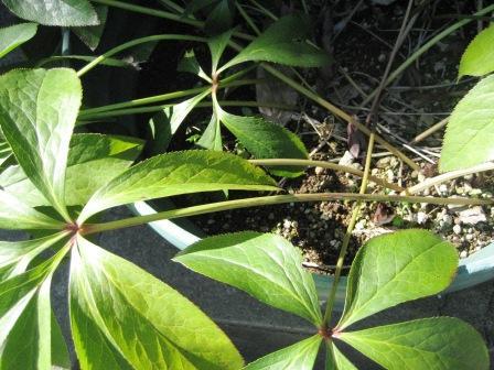 春の兆し・・・・・_c0206545_15505920.jpg