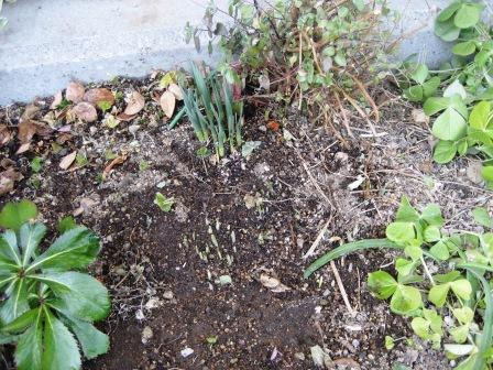 春の兆し・・・・・_c0206545_15511898.jpg