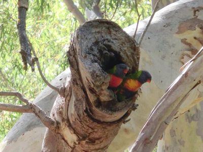 オーストラリアの自然って…_f0234165_20483233.jpg