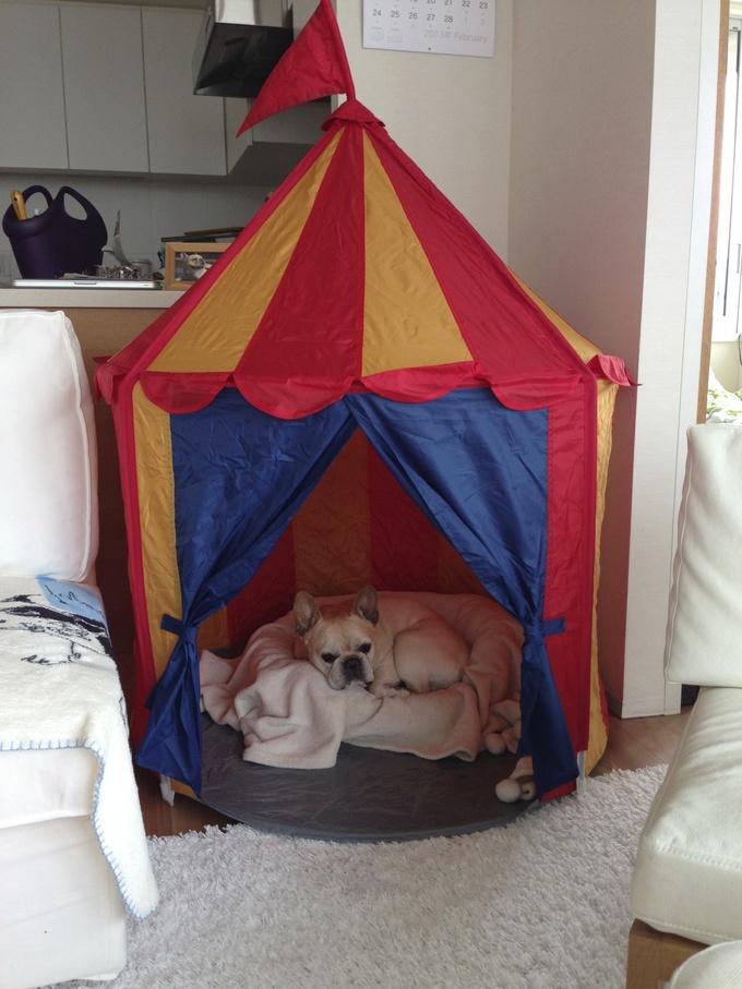 犬小屋。_f0143269_15435775.jpg