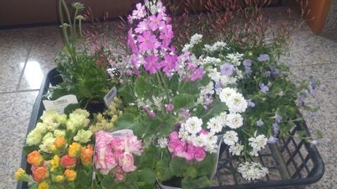 真冬に春の花。_d0182179_1933256.jpg