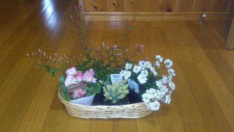 真冬に春の花。_d0182179_2013159.jpg