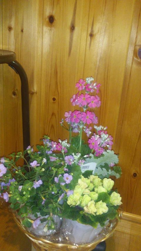 真冬に春の花。_d0182179_2023733.jpg