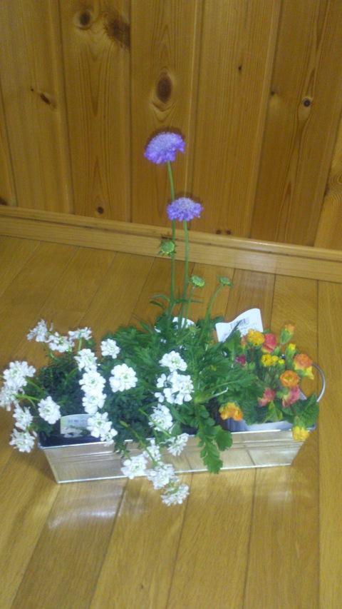 真冬に春の花。_d0182179_202934.jpg