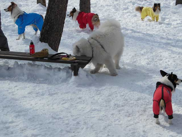 日曜に雪遊びに行ってきました_b0120492_14462567.jpg
