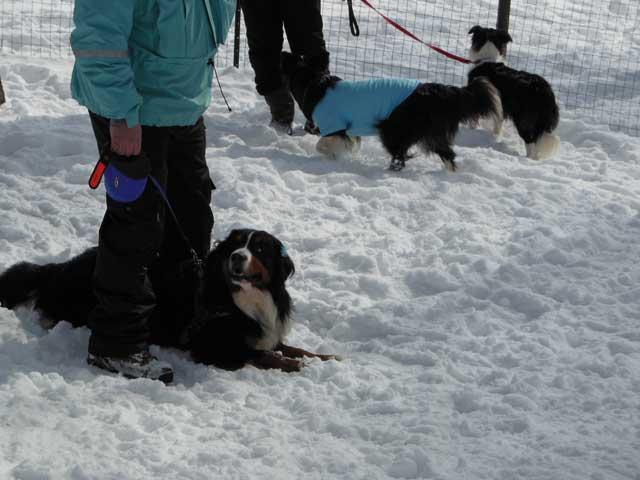 日曜に雪遊びに行ってきました_b0120492_14475134.jpg