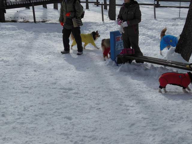 日曜に雪遊びに行ってきました_b0120492_14515117.jpg