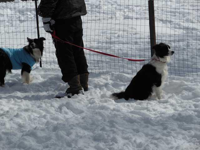 日曜に雪遊びに行ってきました_b0120492_1455557.jpg