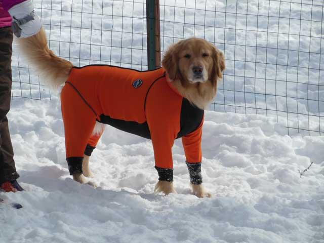 日曜に雪遊びに行ってきました_b0120492_14555713.jpg