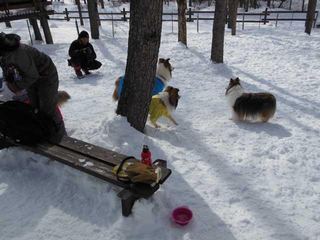 日曜に雪遊びに行ってきました_b0120492_14575690.jpg