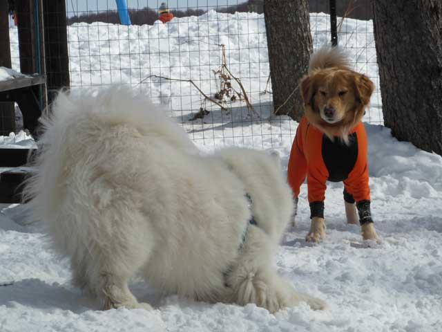 日曜に雪遊びに行ってきました_b0120492_1510442.jpg