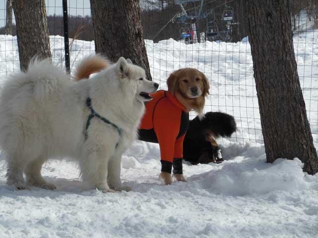 日曜に雪遊びに行ってきました_b0120492_15273032.jpg