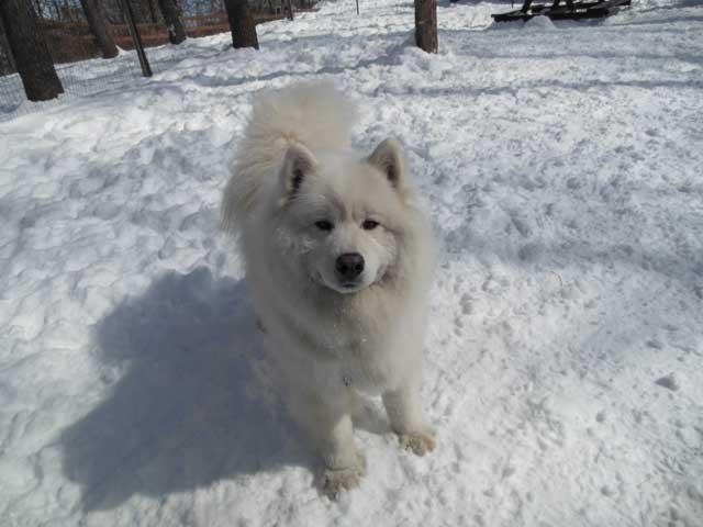 日曜に雪遊びに行ってきました_b0120492_15371150.jpg