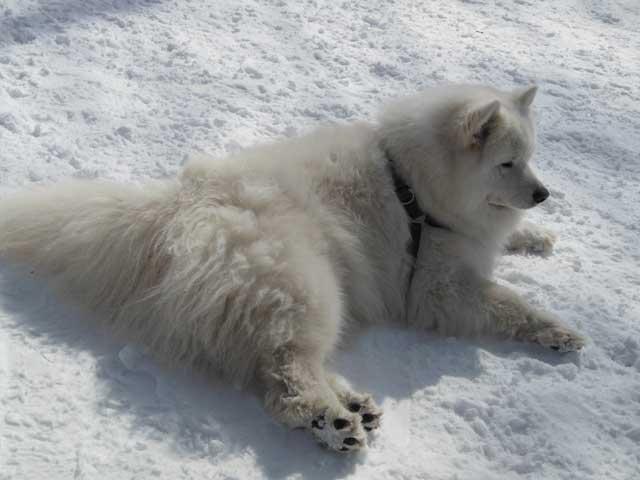 日曜に雪遊びに行ってきました_b0120492_15381833.jpg