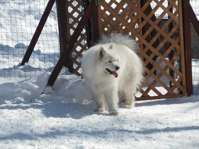 日曜に雪遊びに行ってきました_b0120492_15464269.jpg